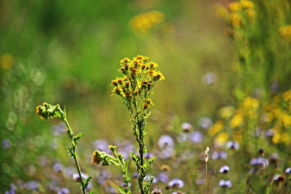 Allergy during Ragweed Season