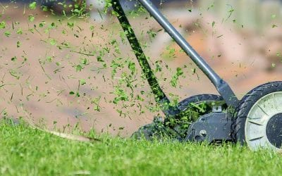 Grass Allergies:  A Source of Summer Misery
