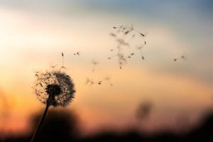 Allergies Becoming More Common
