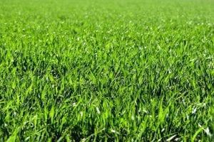 Summer Sneeze Grass Allergy
