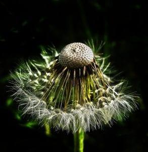 Pollens Strike