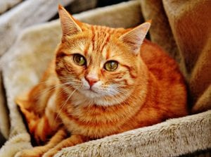 New Vaccine to Knock Out Allergies to Cats