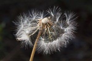 Prepare for the Spring Allergy Season